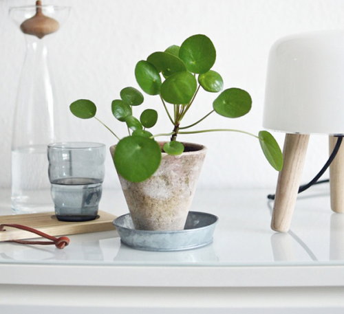 "6 ""IT"" PLANTES D'INTERIEUR 2015"